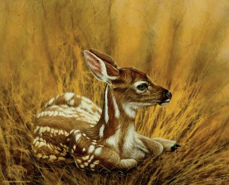 Camouflage-Fawn-Deer-Wildlife-Art-Painting-Chester-Fields