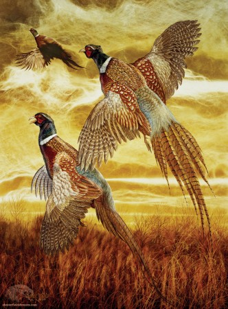 Flushed-Pheasant-Fine-Art-Wildlife-Painting-Chester-Fields