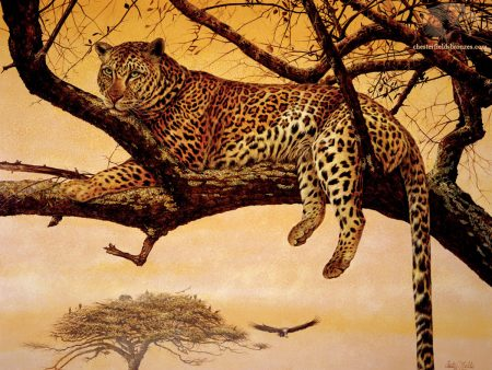 Leopard-Siesta-Chester-Fields-Wildlife-Art-Painting