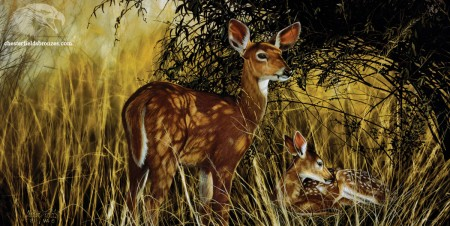 Seclusion-Fawn-Deer-Wildlife-Art-Painting-Chester-Fields