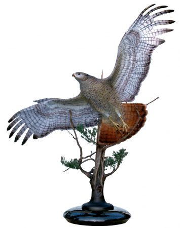 Sovereign-Skies-Bronze-Red-Tailed-Hawk-Sculpture