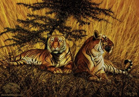 Tiger-Terrain-Wildlife-Art-Painting-Chester-Fields-Bengal